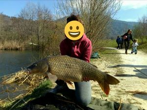 Common Carp — Paul Poencet