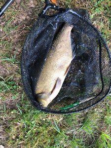 Common Carp — Chris Elrinael