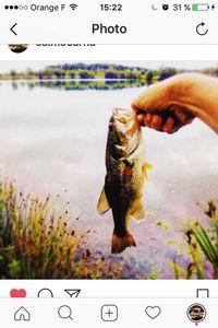 Largemouth Bass — Arthur Ebrard