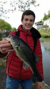 Largemouth Bass — Alexis Bouvier