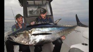 Bluefin Tuna — Olivier Leleu