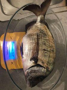 Sar Commun — Arno  Fishing