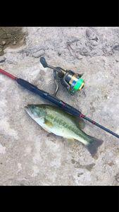Largemouth Bass — Pierre Pelloin