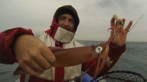 European Squid — Raph CSMPêche