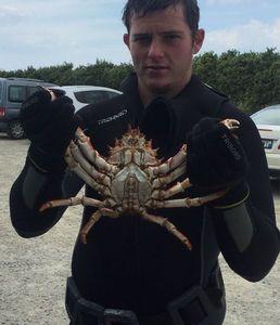 Common Spider Crab — Steven Dorso