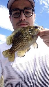 Rock Bass — Brice Guilbaud