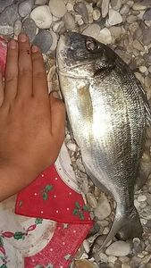 Black Seabream — Joan David