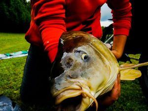 Carpe Miroir — ALSA FISHING