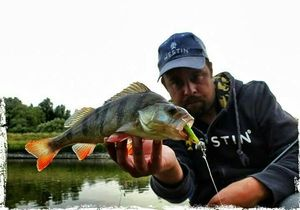 European Perch — Manu Vankeirsbilck
