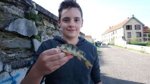European Perch — Maxime Cherrier