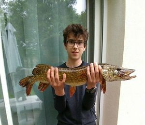 Northern Pike — Anatole Dranguet