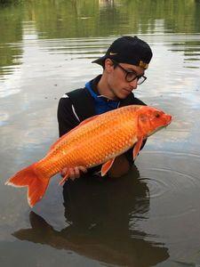 Koï Fish — Antonin Schuller