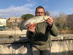 Chub — Fish & Fils
