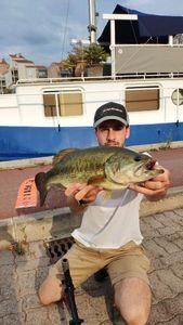 Largemouth Bass — Victor Damin