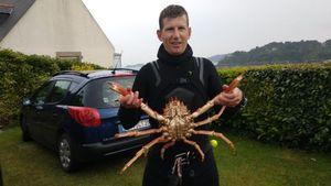 European Spider Crab — Fabrice Fortin
