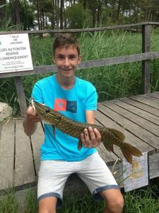 Northern Pike — Simon Perrin