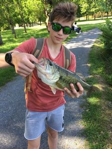 Largemouth Bass — Quentin Vicente