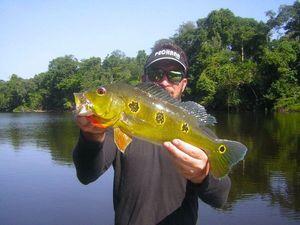 Peacock Bass (Tucunaré Orinocensis)