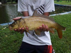 Common Carp — Kevin Kiffer