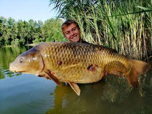 Common Carp — Thibaud Mulenet