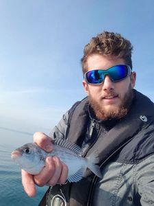 Dorade Grise (Griset) — Abzhc Fishing