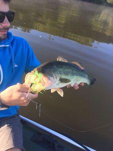 Largemouth Bass — Bastien Zapata