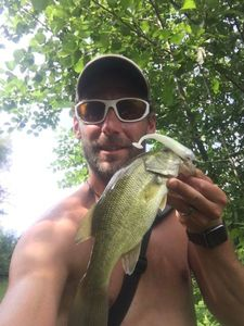 Largemouth Bass — Morgan Finet