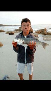 European Bass (Seabass) — Louca Rigaud