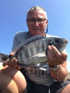 Black Seabream — Philippe Hays