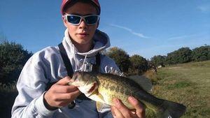 Largemouth Bass — Alexis Morscheidt