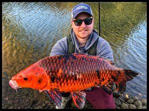 Koï Fish — Andy Salmeron