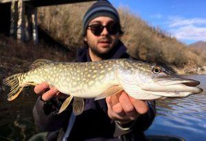 Northern Pike — Mattia Azzollino