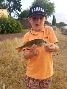 European Perch — Flavino fishing