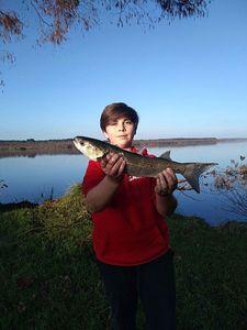 Thicklip Grey Mullet — raf_ fishing