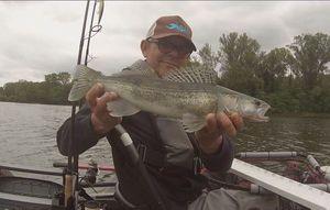 Zander — Franck Kayak Fishing