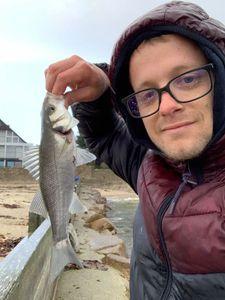 European Bass (Seabass) — Kentin Veerdose
