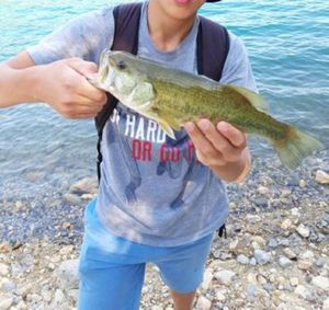 Largemouth Bass — Merlin Combes
