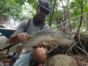redfish — Guillaume pêche Guadeloupe