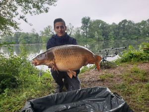 Common Carp — Florian Ponthus