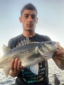 European Bass (Seabass) — gxlabraxfishing 🐟🎣