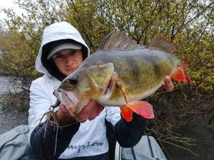 European Perch — Sullyvan Dvn