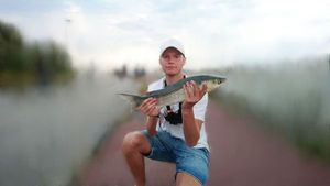 Flathead Grey Mullet — GS DK fishing