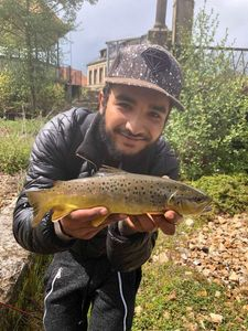 Brown Trout — Riad Chetioui