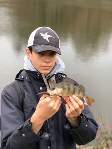 European Perch — Eloi Felicelli
