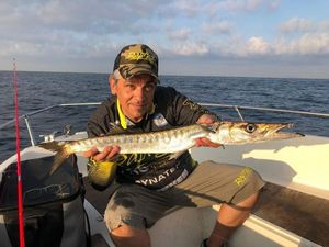 Yellowmouth Barracuda