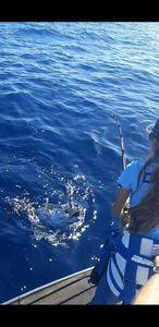 Southern Bluefin Tuna — Morgane Ripoll