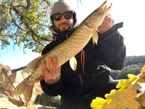 Northern Pike — Greg De Serra