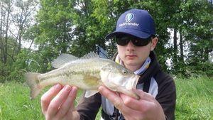 Largemouth Bass — cheuvrautique