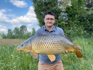Common Carp — Charly Morice