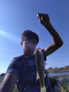 Largemouth Bass — Mael Aarab
